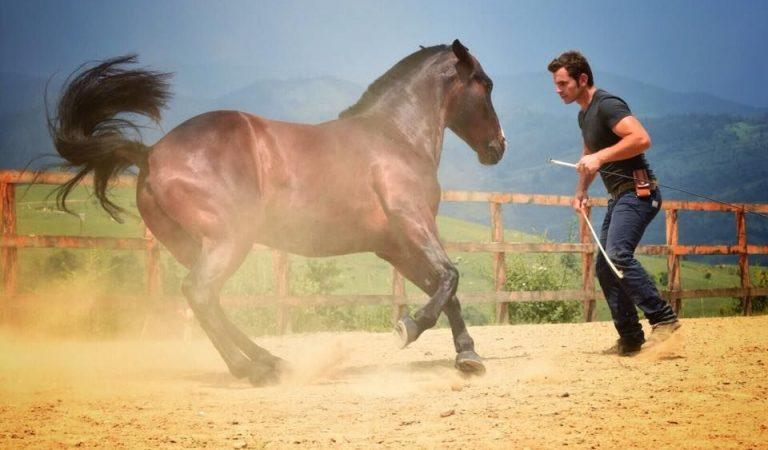 Biletele pentru spectacolele Salina Equines Horse Trophy s-au pus în vânzare