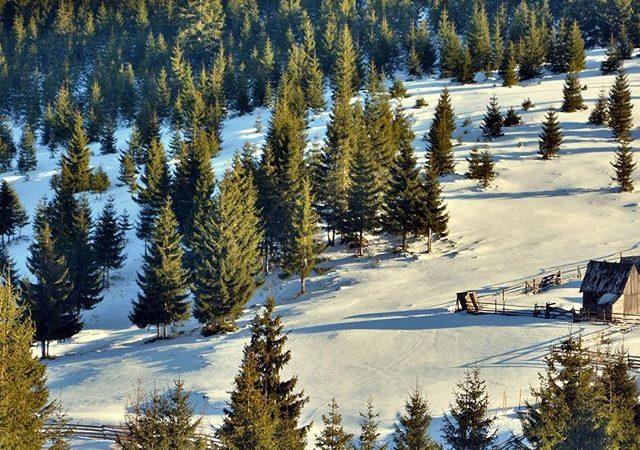 Poza Zilei, 12 Ianuarie: Iarna la Marisel de Ionut Opincariu